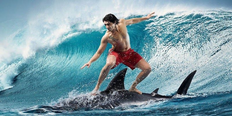серфинг и акулы